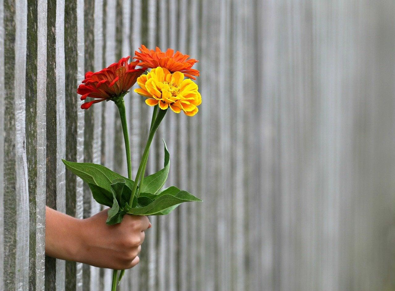 Četvrtak – Davanje i zrelost