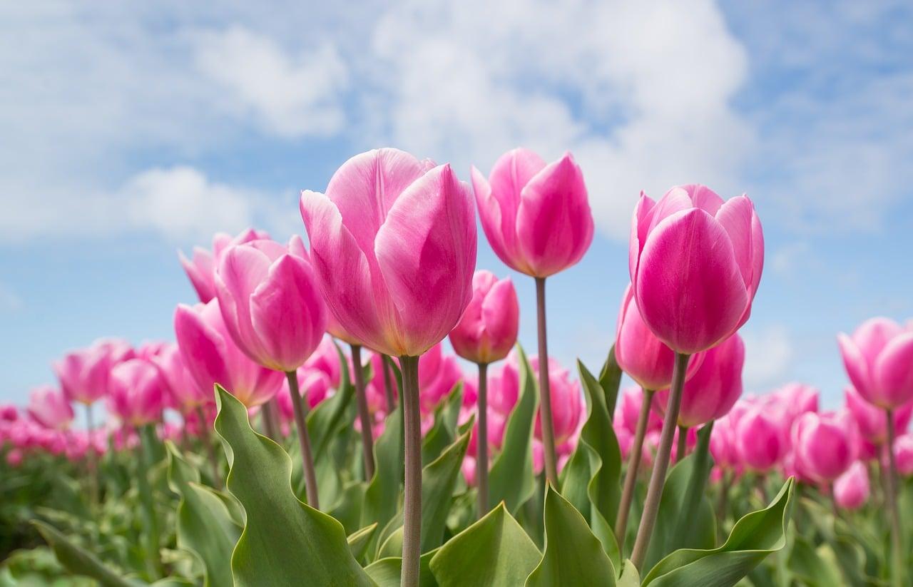 Cvijet ne doživljava drugi cvijet kao konkurenciju, on cvjeta u punom sjaju usprkos drugima